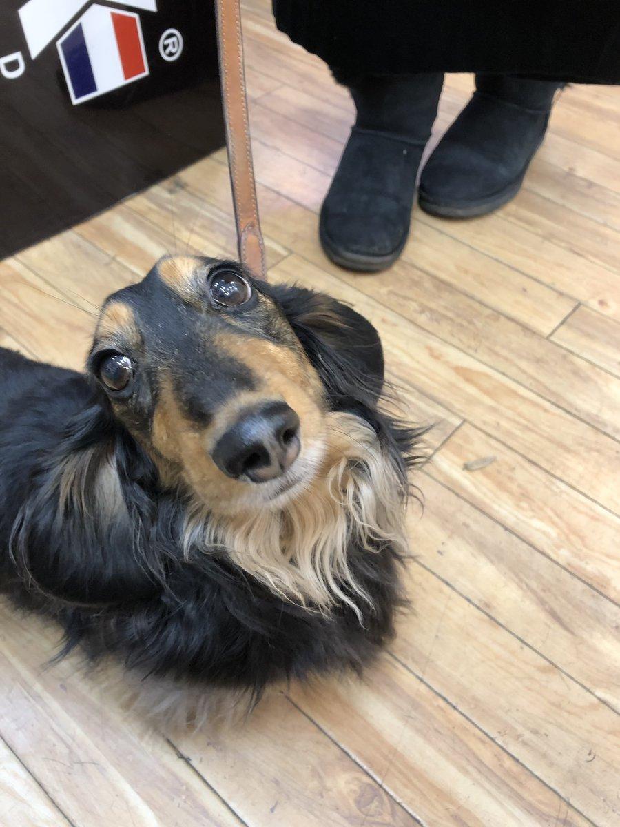 Henry  #shopdog <br>http://pic.twitter.com/kRfSq2orzK