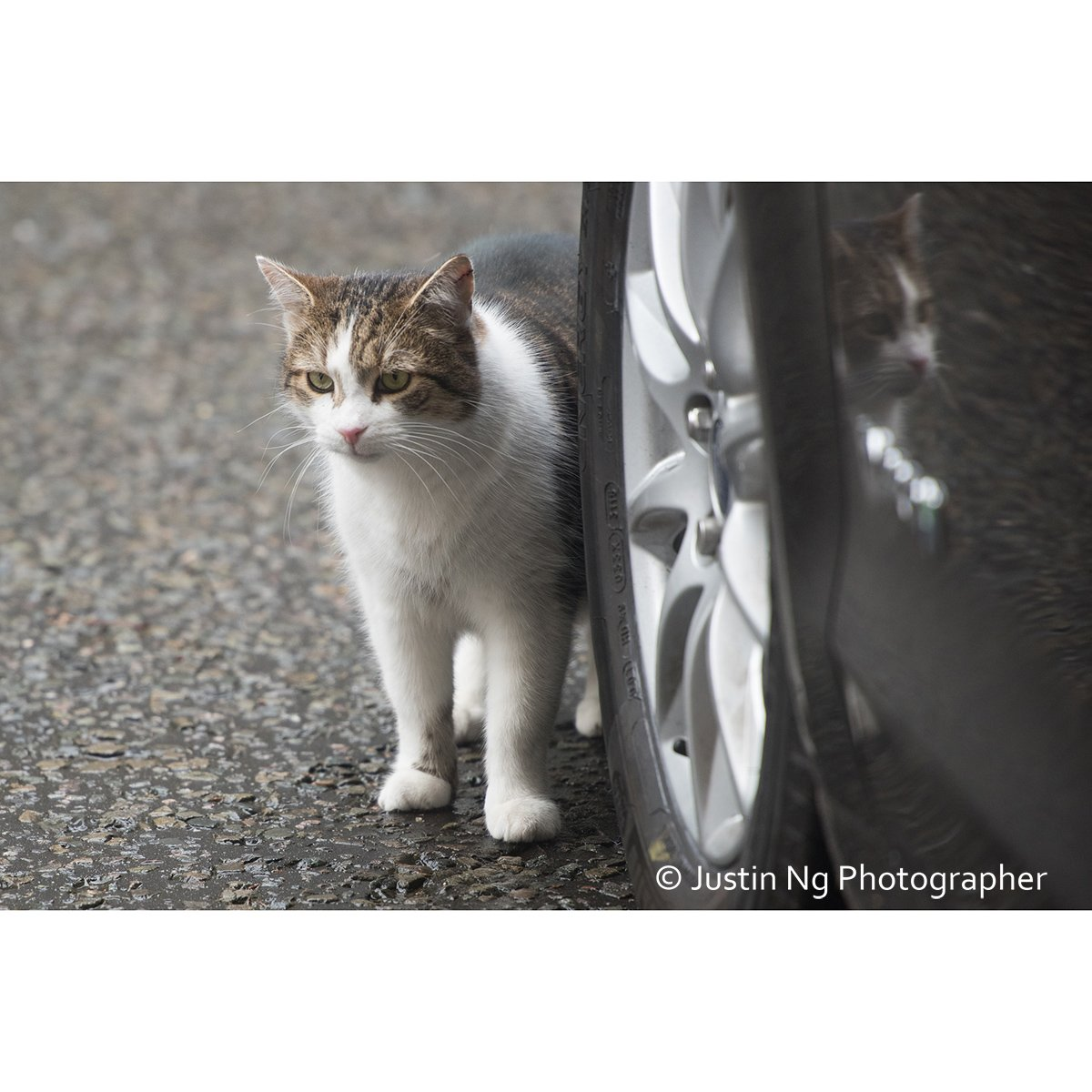 Ready for his close-up. Good to see you @Number10cat Wish we all could be Happy as Larry. <br>http://pic.twitter.com/Y0OkATiFKD