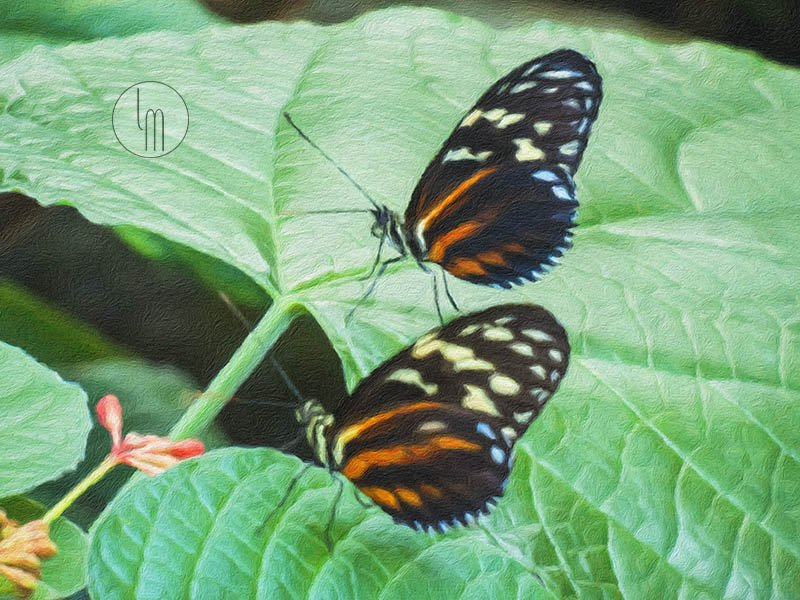 &#39;Cream Spotted Tigerwing - Seeing Double&#39; by Leslie Montgomery  https:// leslie-montgomery.pixels.com/featured/cream -spotted-tigerwing-seeing-double-leslie-montgomery.html &nbsp; …  @lesislie #uniquegifts #giftideas #buyart #originalart #homedecor #fineartprints  #contemporaryart #originalartwork #modernart #onlineshop #FineArtAmerica #Butterflies #insects <br>http://pic.twitter.com/muYRWoSZV1