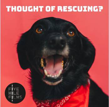 Thinking about giving a rescue dog a loving, forever home? We want to help you to find your dream dog match on an exciting new documentary for ⁦@Channel4⁩ Get in touch NOW at rescuedog@fivemilefilms.co.uk and tell us a little bit about yourself #adoptdontshop <br>http://pic.twitter.com/DDP9iKo1Pi