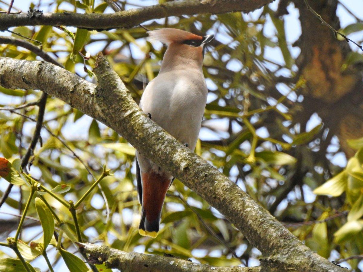 Птицы беларуси в картинках сегодня порода