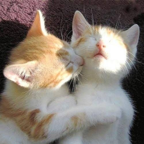 Romantic moments.. #cats #friendship #LoveYourPetDay #Love #Romantic<br>http://pic.twitter.com/G52CtEGOBL