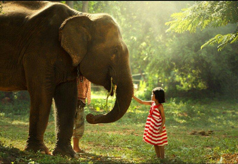 Картинки со слонами берущие за душу