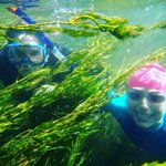 Peek-a-boo!  We had fun exploring the underwater vegetation in the spring fed rivers of Texas last week!    #botany #river #spring #clearwaters #texas #hillcountry #waterplants #iamabotanist #explore #planthunter #swim #outdoorswimming #nature #naturelovers #getoutside