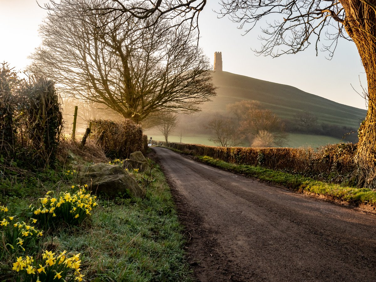 Looking very spring like with the daffodils on the way to the Tor. #glastonbury #somerset. <br>http://pic.twitter.com/K76ZkZ8v9F