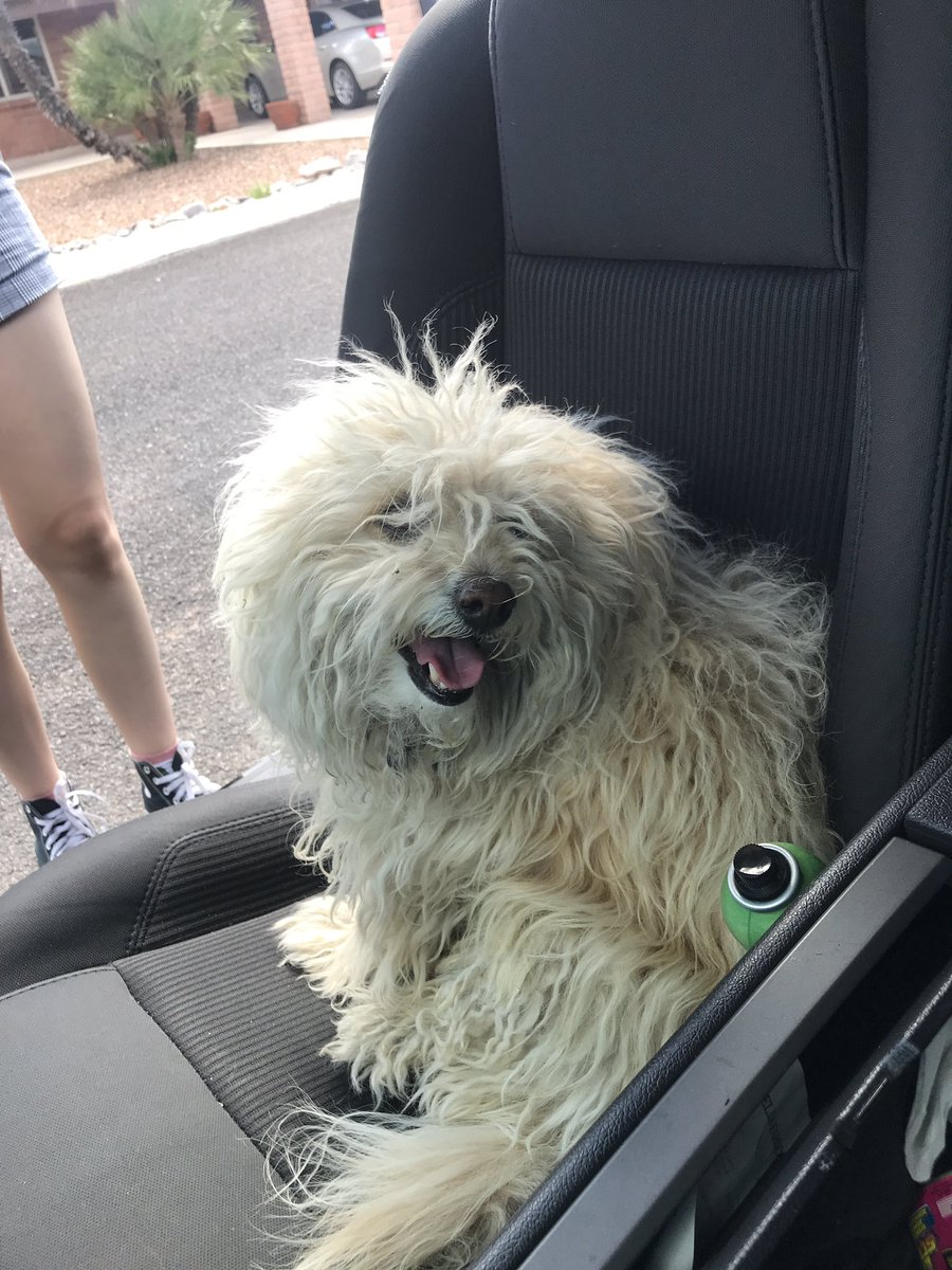 this dog jumped into my car around valencia and westover djsjd very nice 10/10 @whatsuptucson pls find owner or he's gonna be a Lopez<br>http://pic.twitter.com/PjkbyDdayo