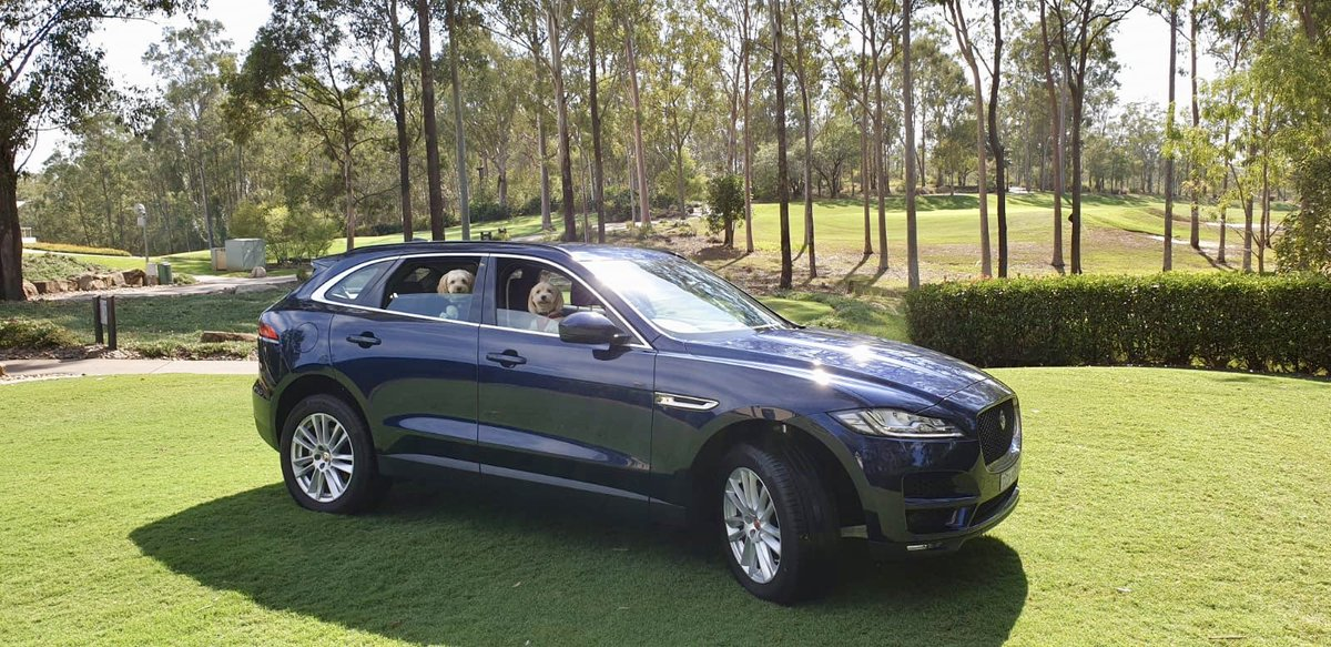 Missing adventures with these two gremlins in my @JaguarAUS 🚙 #FPACE #Jaguar