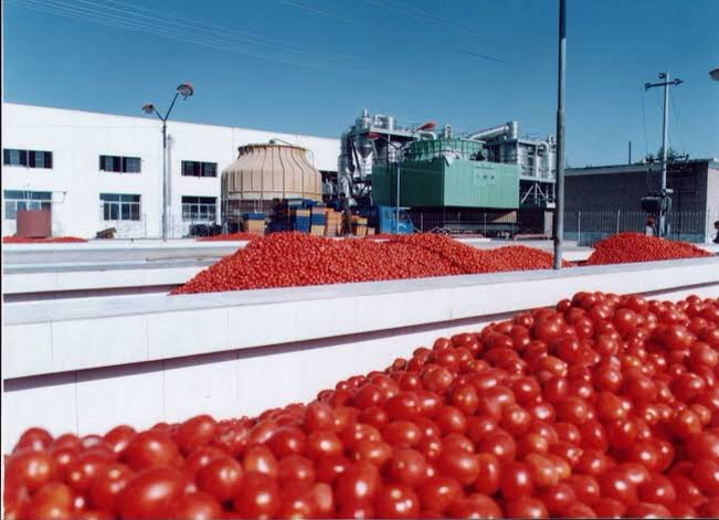 The Dangote Tomato Paste plant started producing tin tomato last week,again. CBN is giving N250 billion loan to people who wish to plant tomatoes. The new plant we save Nigeria the $22 billion we send to China, to buy tomato paste annually. Source--https://www.bloomberg.com/news/articles/2019-03-19/dangote-s-nigeria-tomato-plant-resumes-after-years-idling …