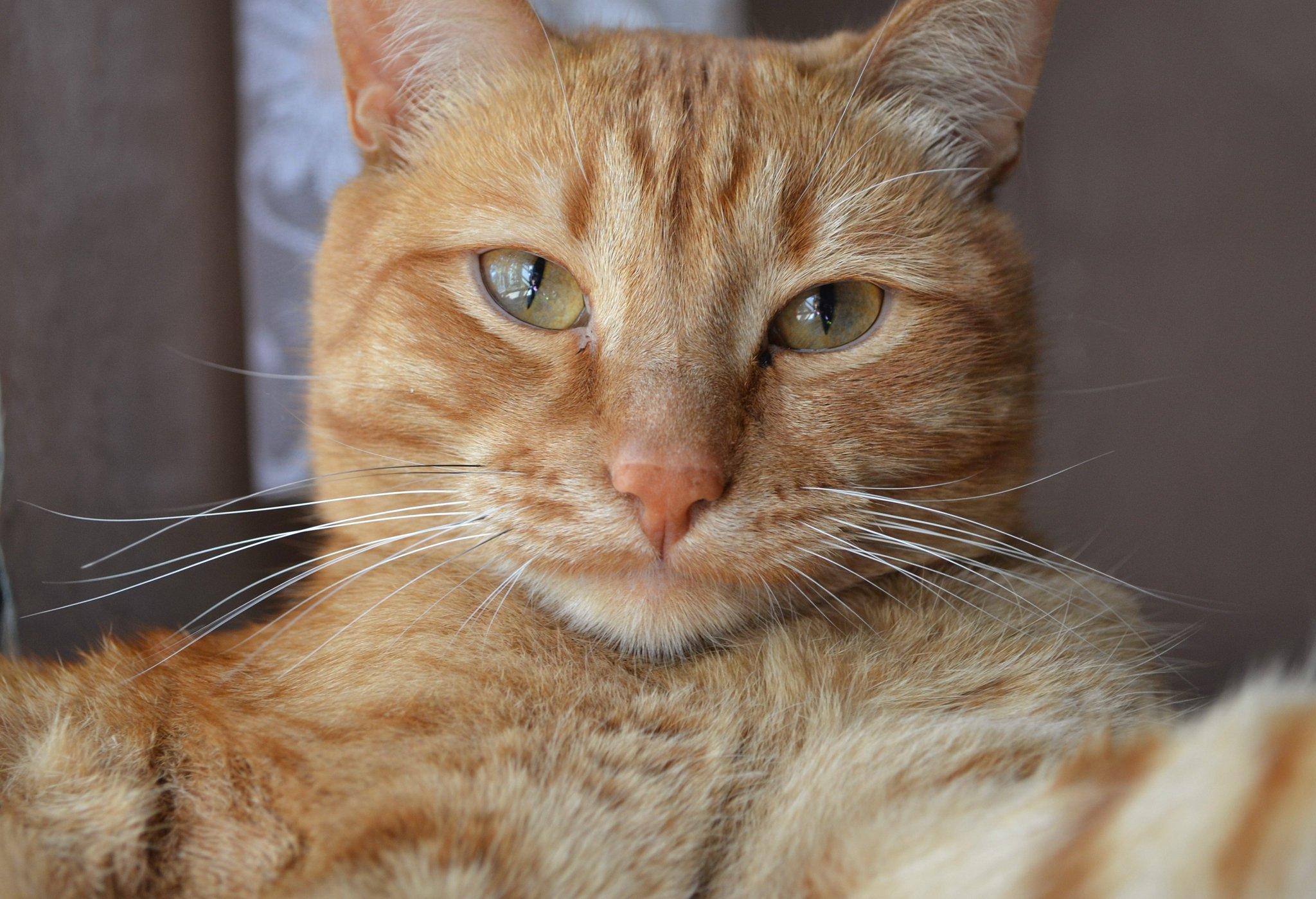 Рыжие прикольные коты картинки, директору