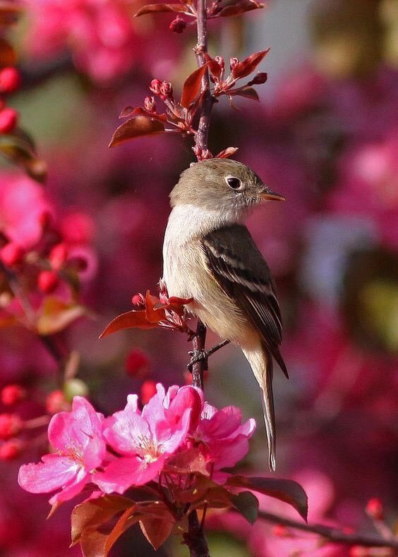 Happy Wednesday Everyone, it's middle of the week time. 😊 Have a beautiful day. 💞🌺💕