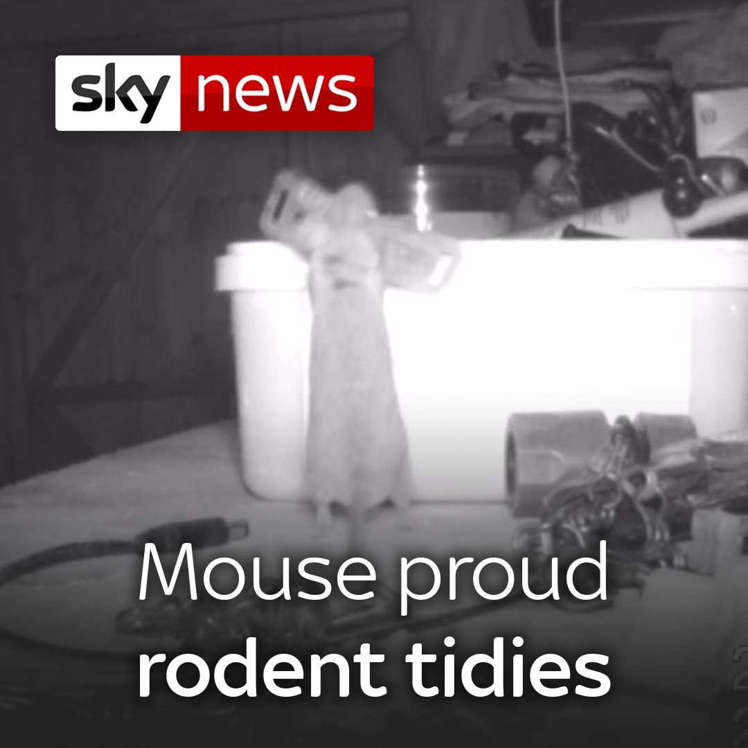 A pensioner was left scratching his head over who was cleaning his garden shed every night - the culprit was this helpful mouse 🐁