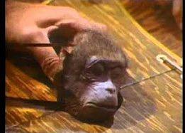 Росія завдяки анексії Криму опинилась, на відміну від України, у невизнаних світом кордонах.  Кацапська мавпа засунула лапу в пастку, щоб взяти банан. Пастка зачинилась. Наближаються карателі, щоб трепанувати череп і вирізати цій ще живій тупий мавпі її огидний кацапський мозок.