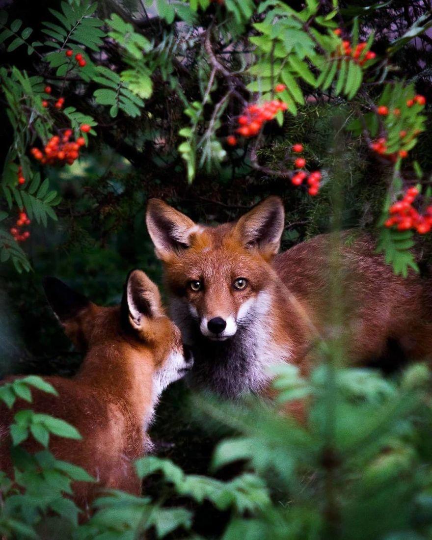 Картинки с лесными зверями, фрактальная графика