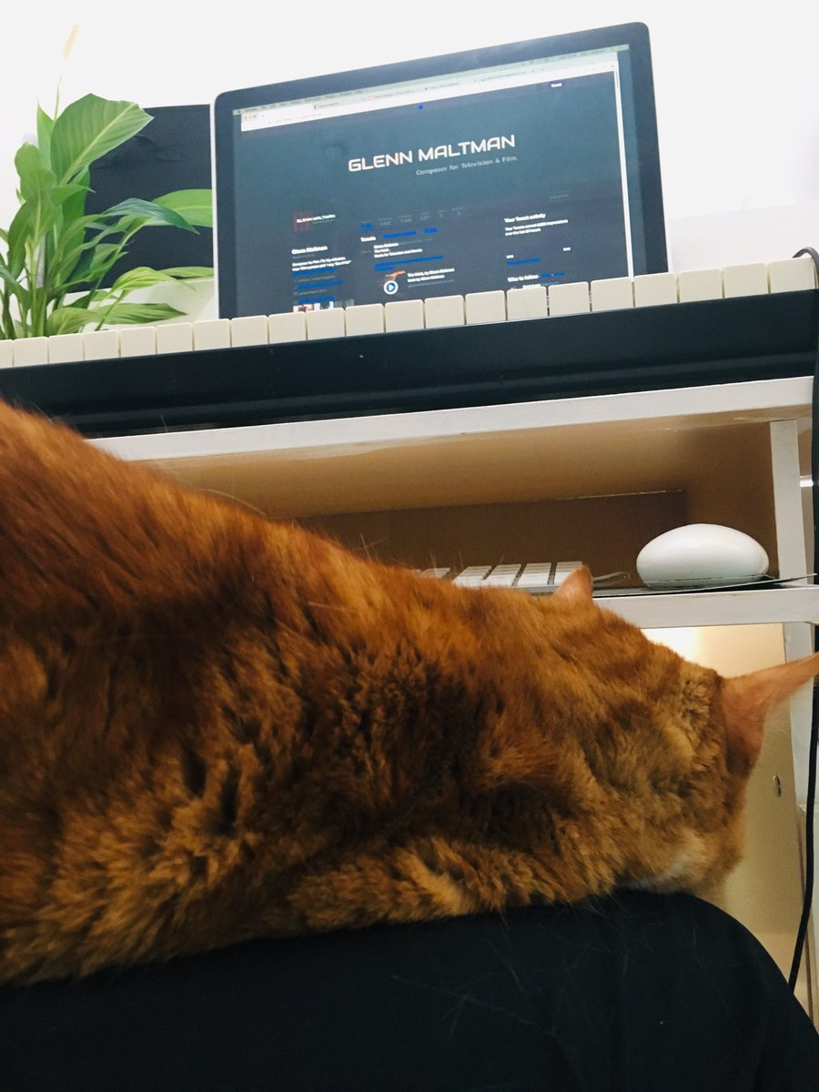 Not the greatest of working conditions . But Alvin doesn't ask for much, so sitting sideways to let him on my knee while I work, I think it's the least I could do. #loveanimals #musicianlife <br>http://pic.twitter.com/HzRen4yHRN