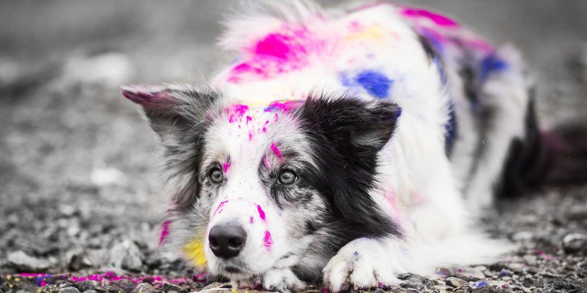 With this #Holi festival and excitement building, it's important to prepare so that companion and stray #animals aren't harmed during the #festivities. Play safe and a Happy Holi/Have a safe, responsible & a very very #HappyHoli .