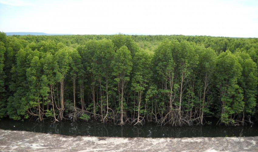 Today is #InternationalDayOfForests 🌳🌳🌳 #Mangroves form aquatic forests that connect the land and sea. Like terrestrial forests, they are threatened threatened by #deforestation. Learn more http://www.mangrovealliance.org/mangroves