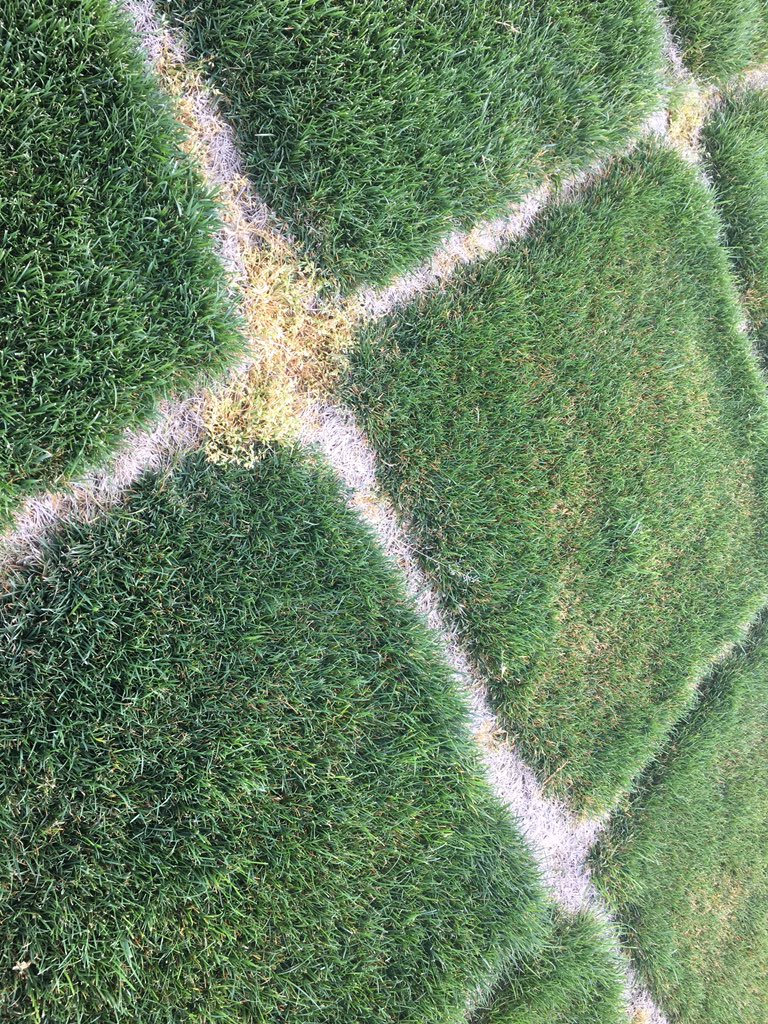 @FMCturf two #Xonerate2SC apps on cool season, rye, tall fescue, fine fescue and Kentucky bluegrass included, a month later #Poa is gone!  @AleaPedroza<br>http://pic.twitter.com/LmWOTZb2MU