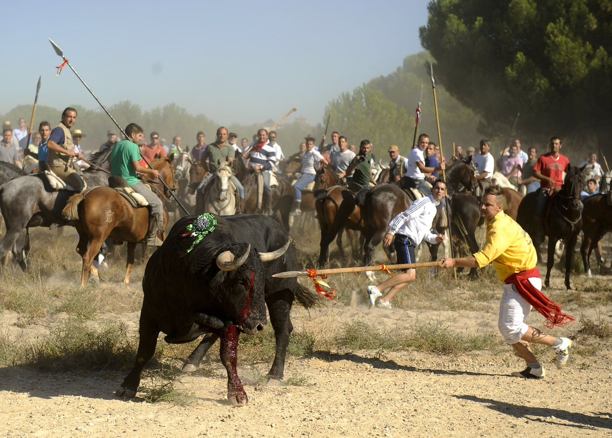 Victory! Locals at the Toro de la Vega festival in #Spain will no longer be able to torture bulls by shoving spears in them. The Spanish Supreme Court has ruled it animal cruelty. RT. Next up is to #BanBullFighting