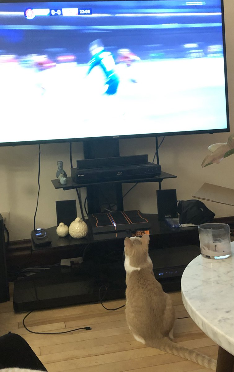 A kitten enjoying a replay of Chelsea and Manchester United. #CHEMUN #FACup #EPL #animalhumanemn #ESPN #Chelsea #chelseaFC #ManU #Manchester #soccer #football #cats #kittens #kittensoftwitter #rescue #rescuecats @espn