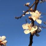 Image for the Tweet beginning: Happy Spring! #VernalEquinox #spring #arwx