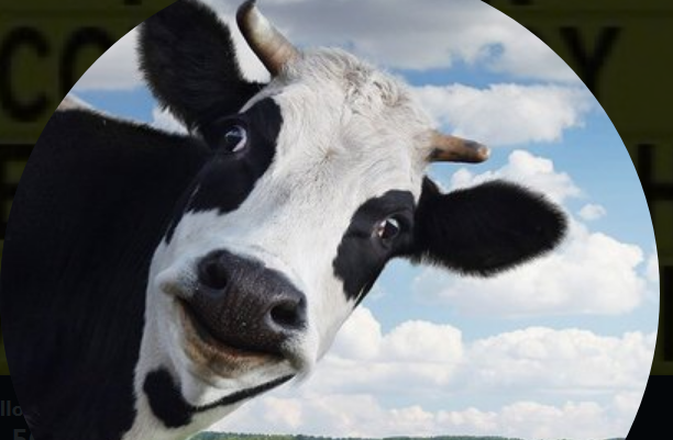 .@DevinCow's follower count is *whey* higher than Congressman Nunes now!