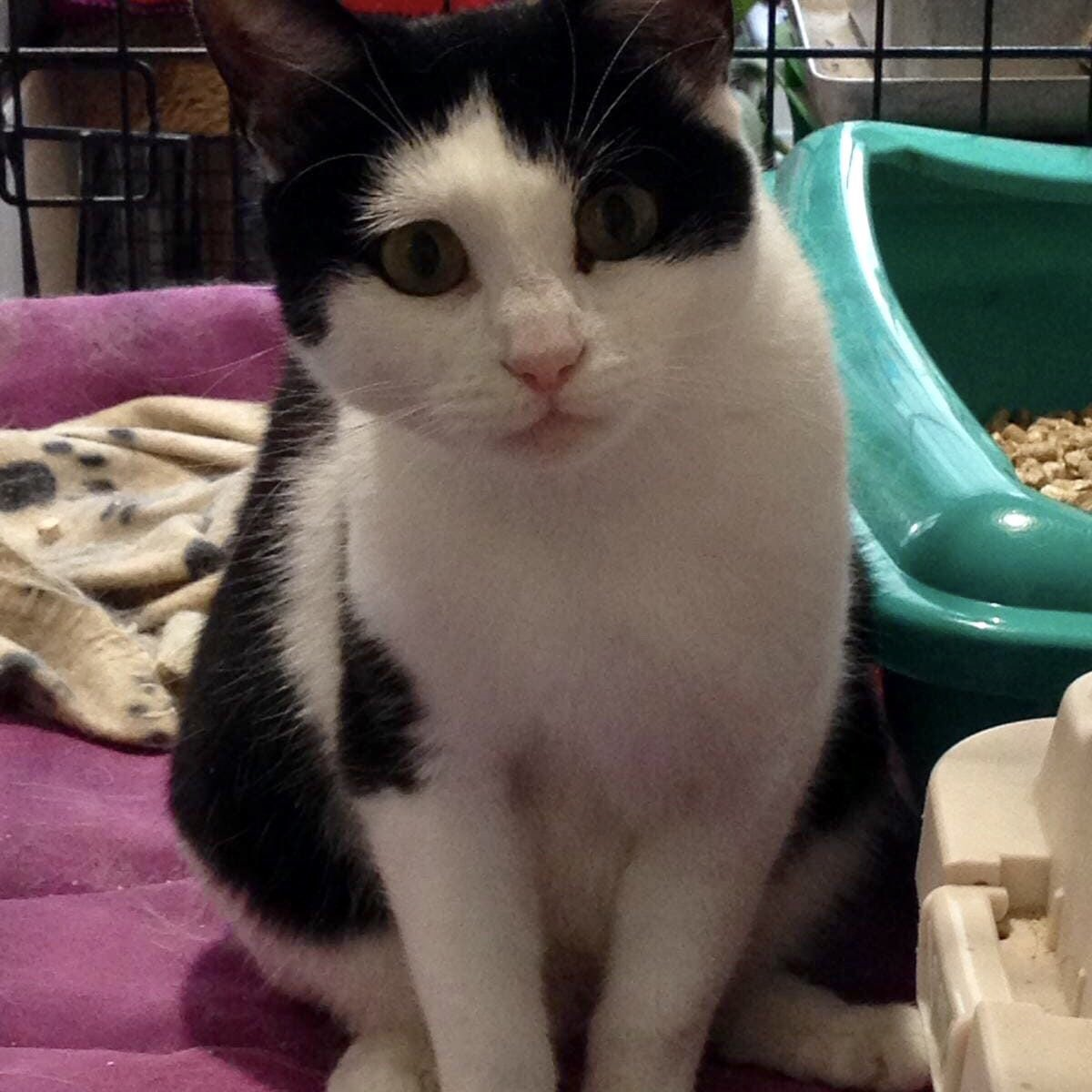 Could someone please adopt lovely Lindy this #WhiskersWednesday? She's been waiting too long for a home. Please #AdoptDontShop today! <br>http://pic.twitter.com/gDvI3UqEsb