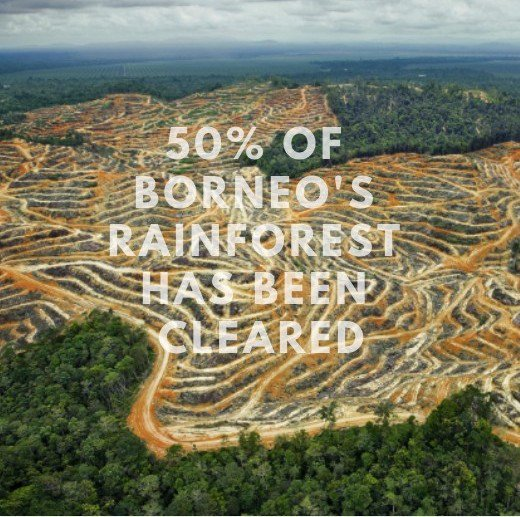 #Deforestation caused by #palmoil is bad for wildlife, people, and the global #climate. Support #sustainability by using products with certified sustainable ingredients!   What are some of your favorite #EarthFriendly products to use?  #SustainableUGA #universityofgeorgia <br>http://pic.twitter.com/54pbLl8b1P