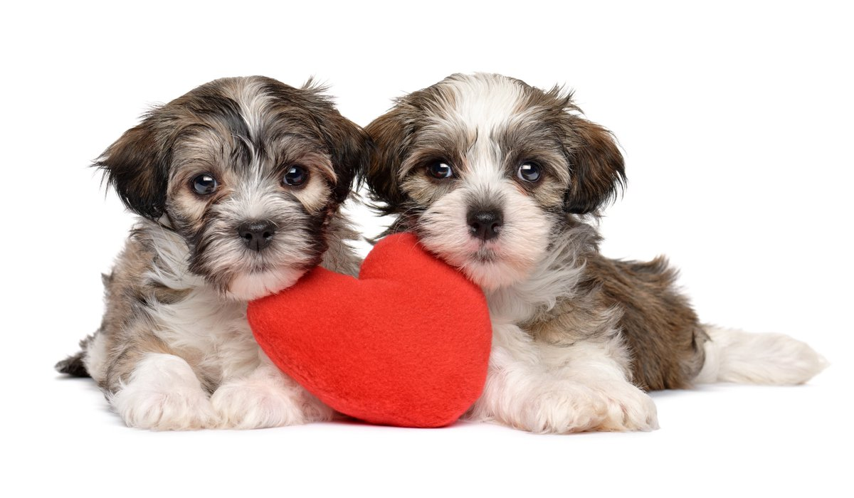 Saturday Is Puppy Day Why Not Consider Adopting PuppyDay AdoptaPet Welovepets