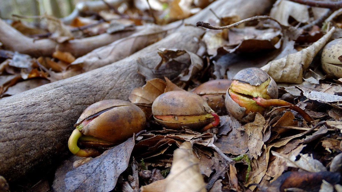 Aus dem Wald's photo on Dort