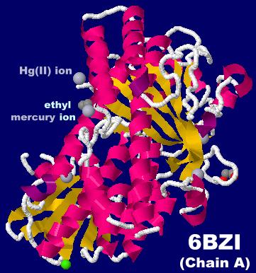 #カガク。#生体分子。#分子。#元素。国際周期表年。Hg。昨日公開のPDBデータ262件(これで総計150,000件突破!)の中から6BZI(エチル水銀イオンと水銀(II)イオンが結合したハロゲナーゼPltM)のA鎖。他に6BZA,6BZN,6BZQ,6BZT,6BZZ公開。JmolトピックNo.866 http://bit.ly/2CtSSpR
