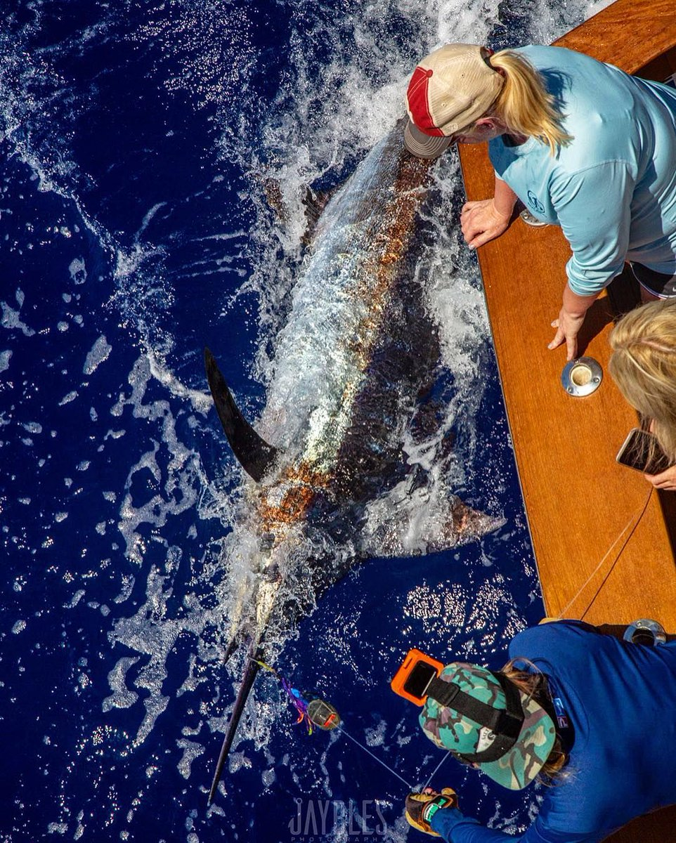 Kona, HI - Benchmark went 1-1 on Blue Marlin.
