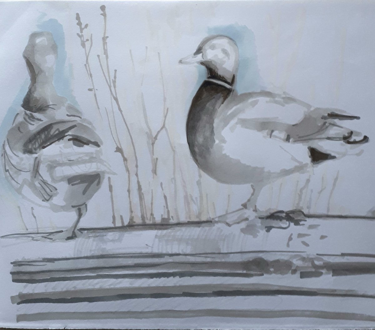 Melanie Mascarenhas's photo on #Ducks