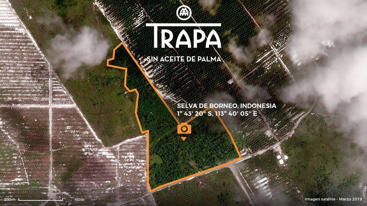 No nos ha quedado más remedio que contratar un satélite para comprobar el estado de la selva, lo que nos ha servido para certificar que, casualmente, esta zona es la única que permanece intacta.