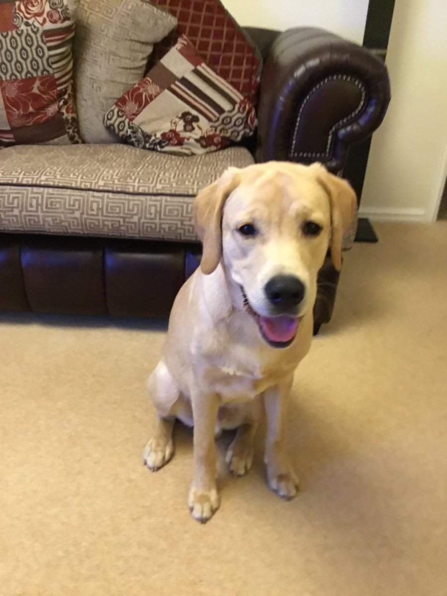 Happy Birthday to our Labrador Max he's 1 year old today