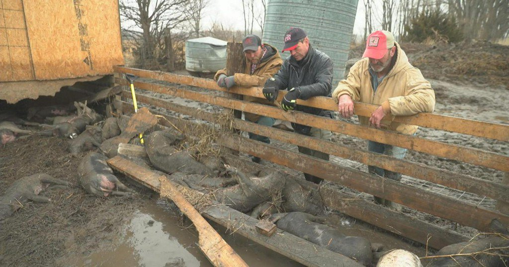 """""""I didn't expect to see nothing alive"""": Farmers hit hard by historic Midwest flooding https://cbsn.ws/2JtNl8F"""