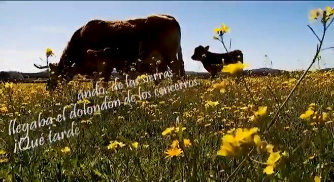 En el #DiaMundialDeLaPoesia, hemos salido a la calle para escuchar una de las poesías más populares de la región. Así suena 'La Nacencia' en la voz de vecinos de #Cáceres.  #EXN https://t.co/RwciWYGznZ