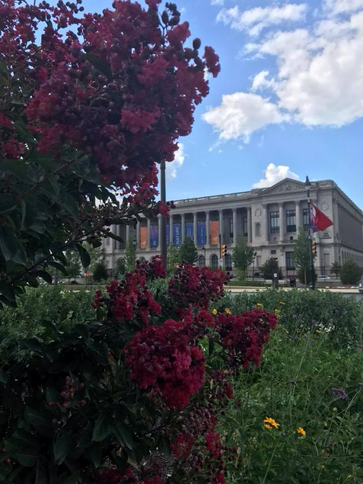 With all this rain we're dreaming of warmer, sunnier weather! We can't wait to see the blue skies and flowers blooming like last July!   #TBT #sun #flowers #library #Philly