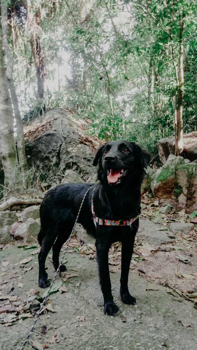 #trail #dogsoftwitter #dogsofinstagram #hikingadventures #hikingwithdogs this morning hiking