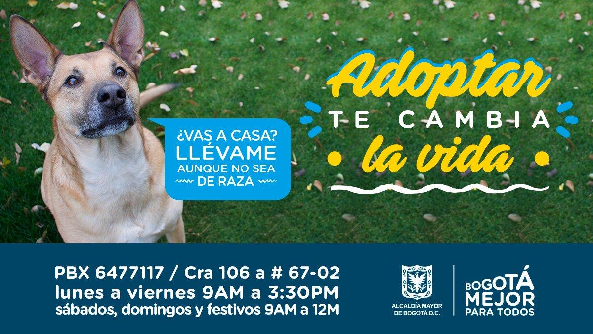 Protección Animal Bogotá's photo on #FelizJueves