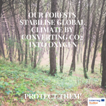 At Interreg Sudoe we're aware of the importance of our forests 🌱🌳That's why we finance key projects to preserve & protect them!💡 Discover @SustforestP #CERES #Epyris @WildFire_RS #Promobiomasse by visiting our website (https://t.co/DV0kaH7BeY ) HAPPY #internationalforestsday