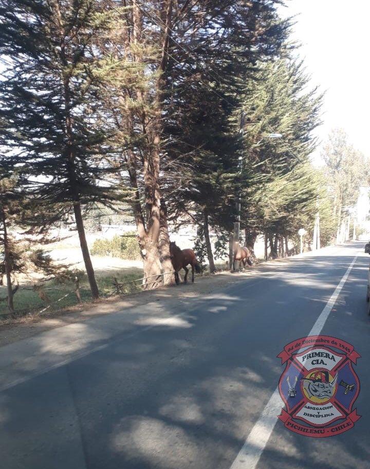 RT @1eraPichilemu ⚠️PRECAUCIÓN⚠️  Nos informan de animales en la vía, ruta 90 a la altura de Puente Negro.  @rne_603_pmu2 @DePichilemuCL @pichilemutvorg @CarrenoCordova