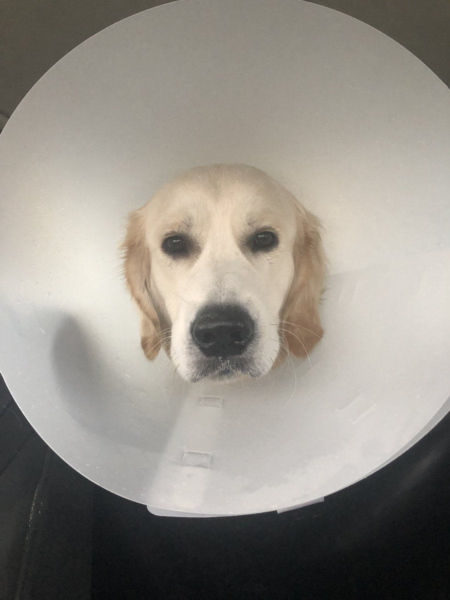 Jack just got neutered and he is HIGH AF.  Standby.