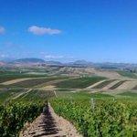 Image for the Tweet beginning: Il prezzo del vino siciliano