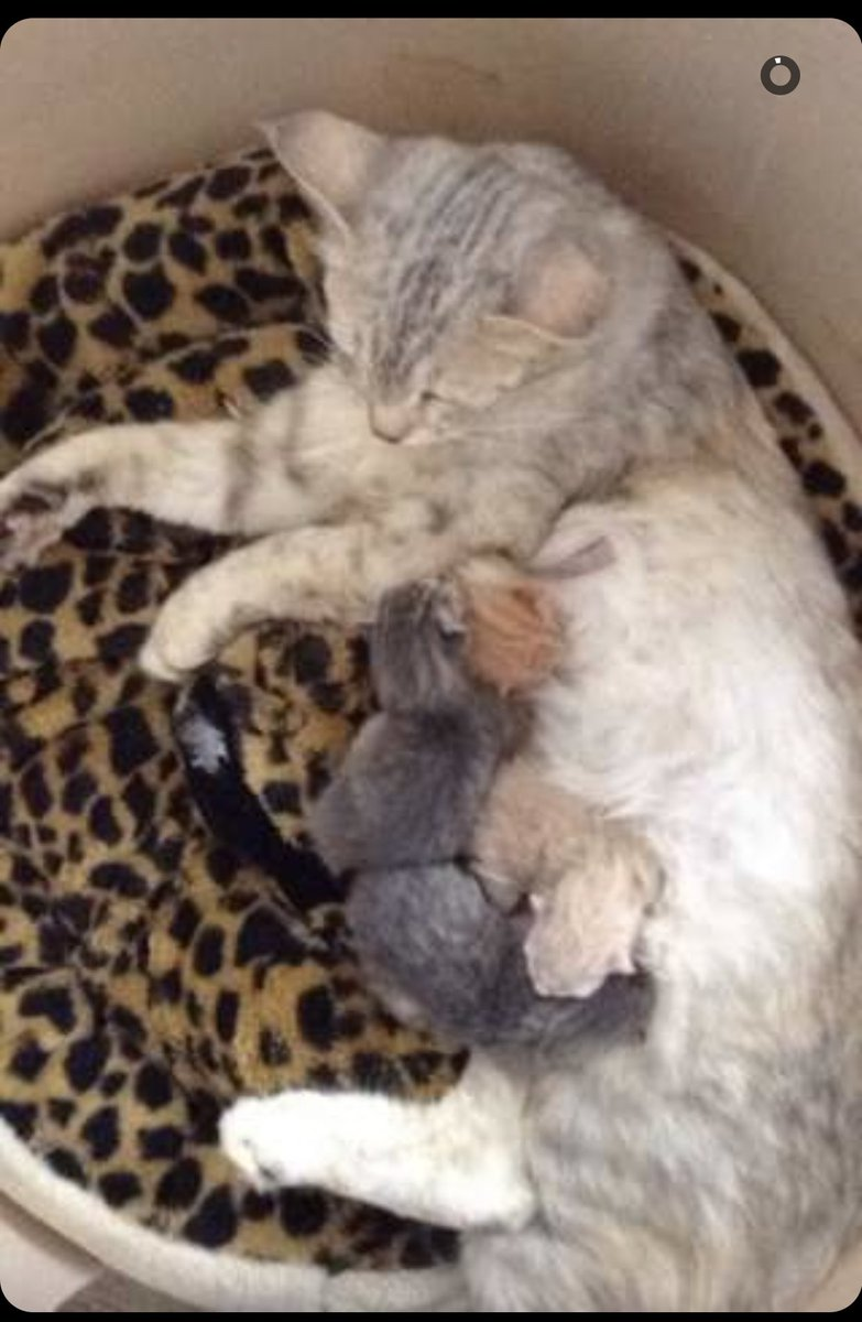 Our cat had her baby's my sister is a young grandma