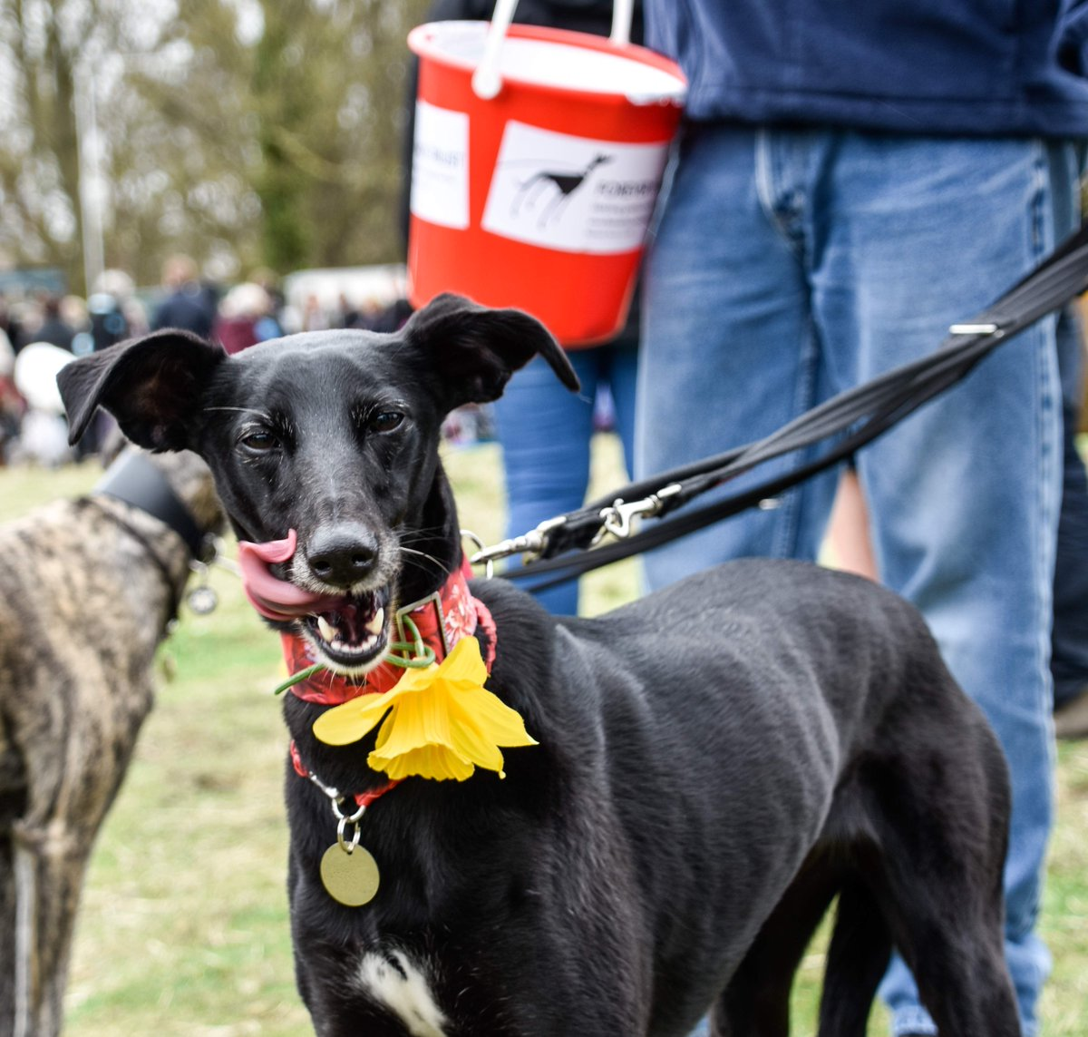 Forever Hounds Trust's photo on ON SALE