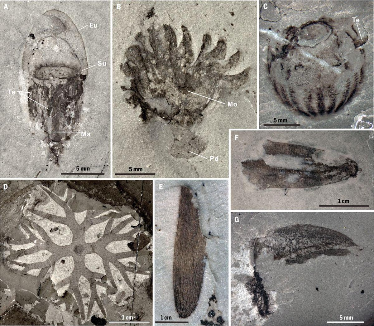 Rob Sansom's photo on #FossilFriday