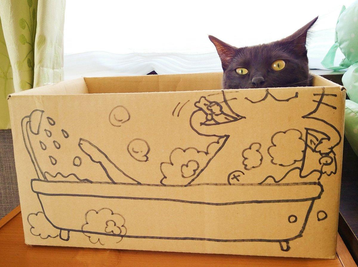 仔猫を拾ったのでさんの投稿画像