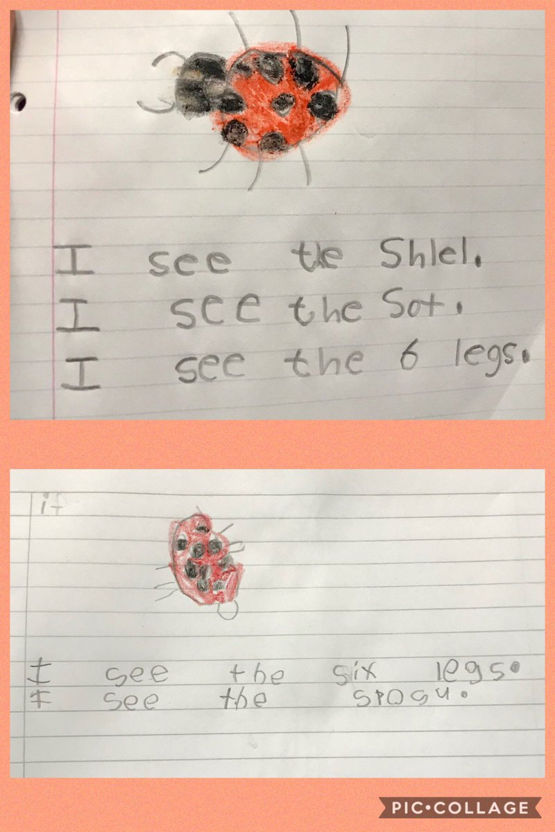 After observing ladybugs and researching their physical characteristics we wrote about what we observed and learned. @HicksTigers #WeAreHicksElem