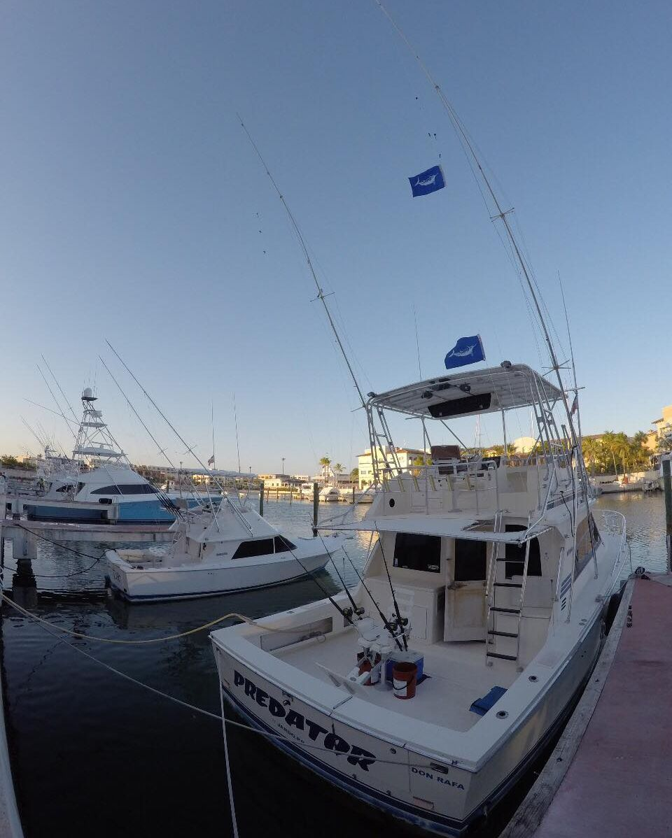 Cap Cana, DR - Predator went 2-3 on White Marlin.