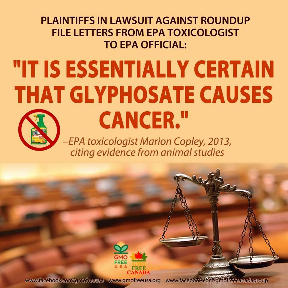 "#FlashbackFriday  EPA toxicologist Marion Copley stated unequivocally to EPA bureaucrat and Monsanto supporter Jess Rowland: ""It is essentially certain that glyphosate causes cancer."" READ the letter: http://gmofreeusa.org/wp-content/uploads/2017/03/EPA_MarionCopleyCorrespondenceToJessRowland_20130304.png …"